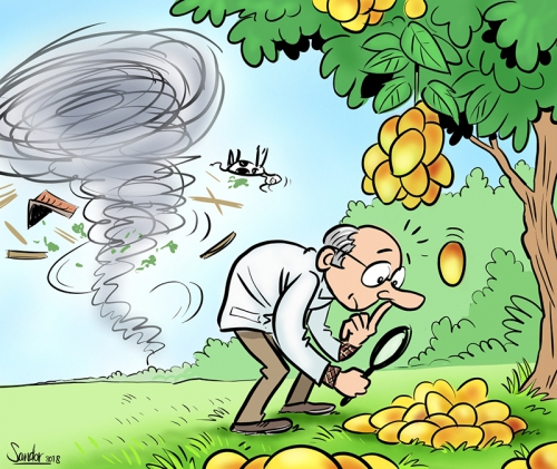 cartoon, illustratie, orkaan, huricane, mango, fruit, agf, agfprimeur